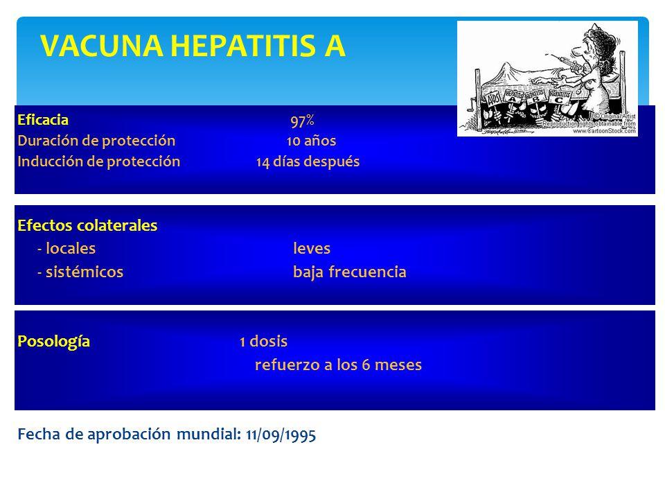 VACUNA HEPATITIS A Eficacia 97% Duración de protección 10 años Inducción de protección 14 días después Efectos colaterales - locales leves - sistémicos baja frecuencia Posología 1 dosis refuerzo a los 6 meses Fecha de aprobación mundial: 11/09/1995