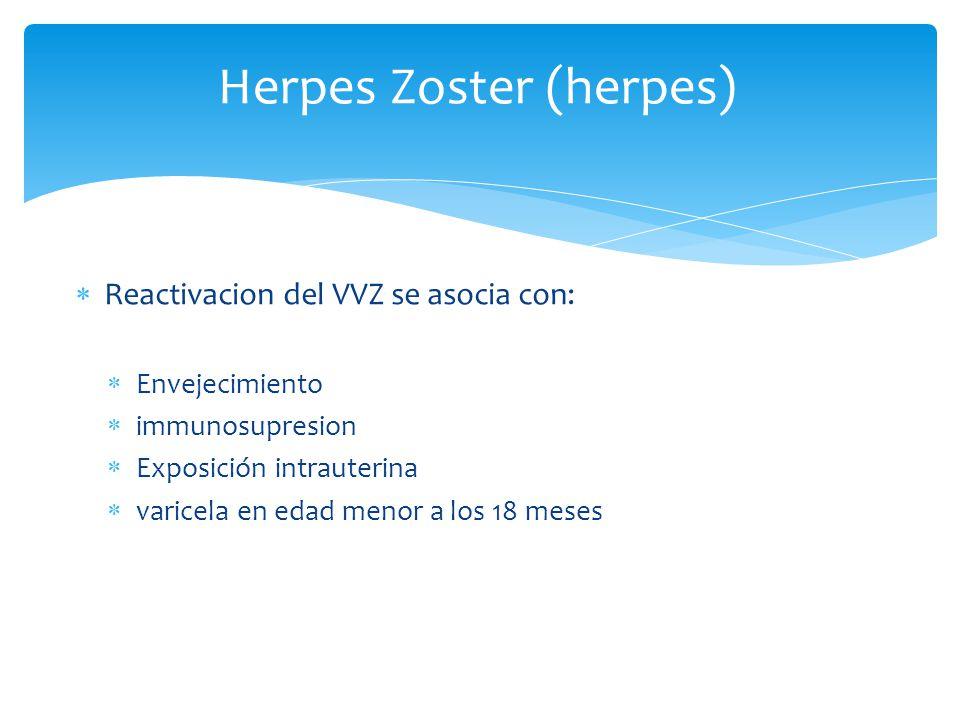 Herpes Zoster (herpes) Reactivacion del VVZ se asocia con: Envejecimiento immunosupresion Exposición intrauterina varicela en edad menor a los 18 mese