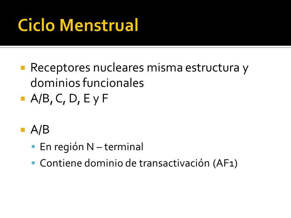 Receptores nucleares misma estructura y dominios funcionales A/B, C, D, E y F A/B En región N – terminal Contiene dominio de transactivación (AF1)