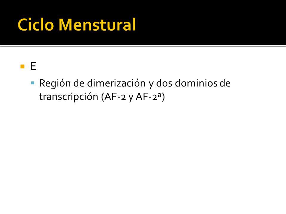 E Región de dimerización y dos dominios de transcripción (AF-2 y AF-2ª)