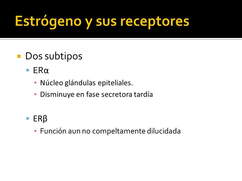 Dos subtipos ER α Núcleo glándulas epiteliales. Disminuye en fase secretora tardía ERβ Función aun no compeltamente dilucidada