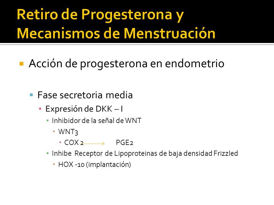 Acción de progesterona en endometrio Fase secretoria media Expresión de DKK – I Inhibidor de la señal de WNT WNT3 COX 2 PGE2 Inhibe Receptor de Lipopr