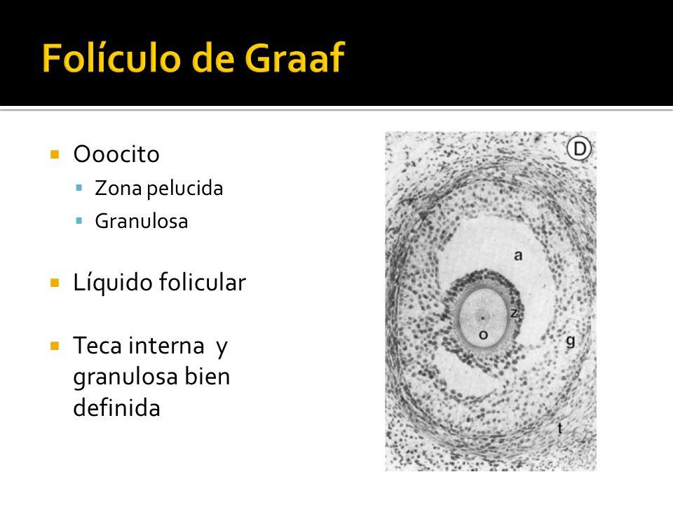 Ooocito Zona pelucida Granulosa Líquido folicular Teca interna y granulosa bien definida