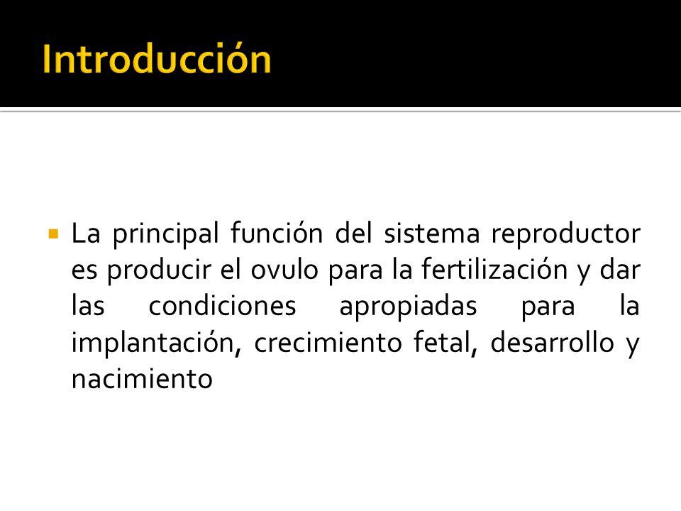 La principal función del sistema reproductor es producir el ovulo para la fertilización y dar las condiciones apropiadas para la implantación, crecimi