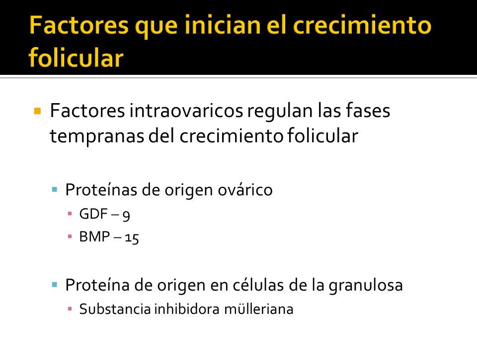 Factores intraovaricos regulan las fases tempranas del crecimiento folicular Proteínas de origen ovárico GDF – 9 BMP – 15 Proteína de origen en célula