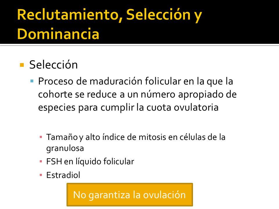 Selección Proceso de maduración folicular en la que la cohorte se reduce a un número apropiado de especies para cumplir la cuota ovulatoria Tamaño y a