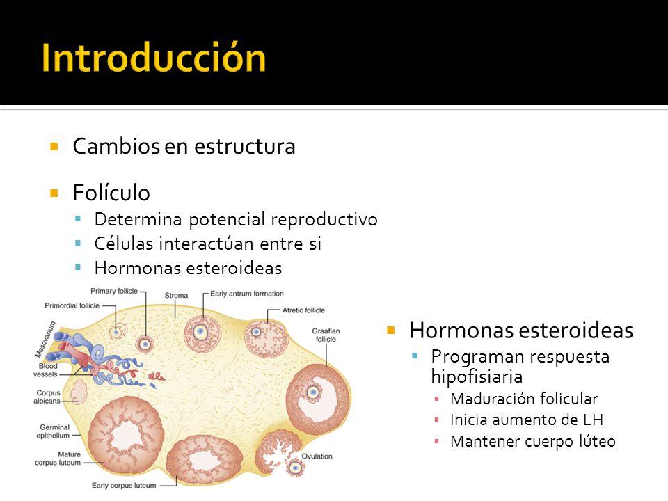 Cambios en estructura Folículo Determina potencial reproductivo Células interactúan entre si Hormonas esteroideas Programan respuesta hipofisiaria Mad