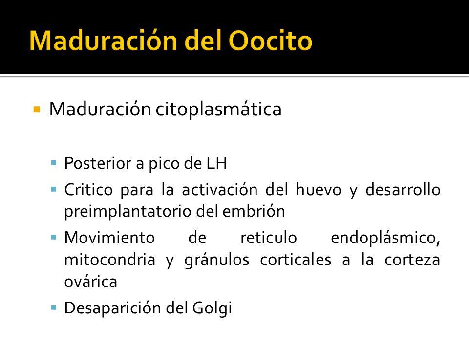 Maduración citoplasmática Posterior a pico de LH Critico para la activación del huevo y desarrollo preimplantatorio del embrión Movimiento de reticulo