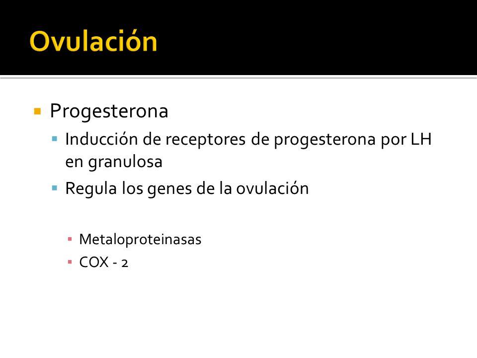 Progesterona Inducción de receptores de progesterona por LH en granulosa Regula los genes de la ovulación Metaloproteinasas COX - 2