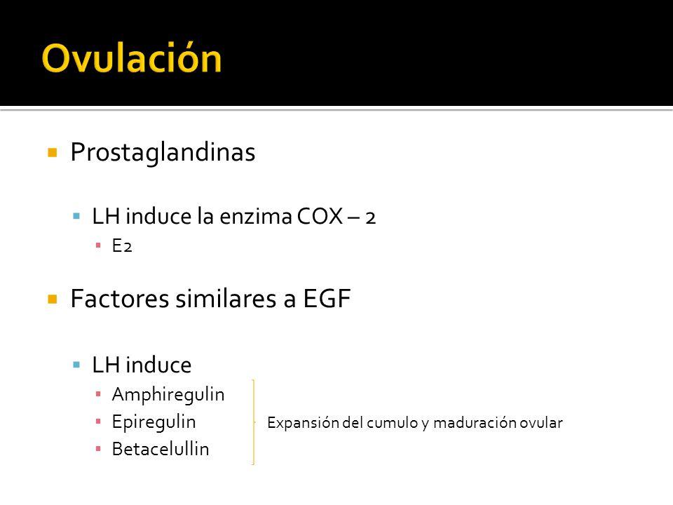 Prostaglandinas LH induce la enzima COX – 2 E2 Factores similares a EGF LH induce Amphiregulin Epiregulin Expansión del cumulo y maduración ovular Bet