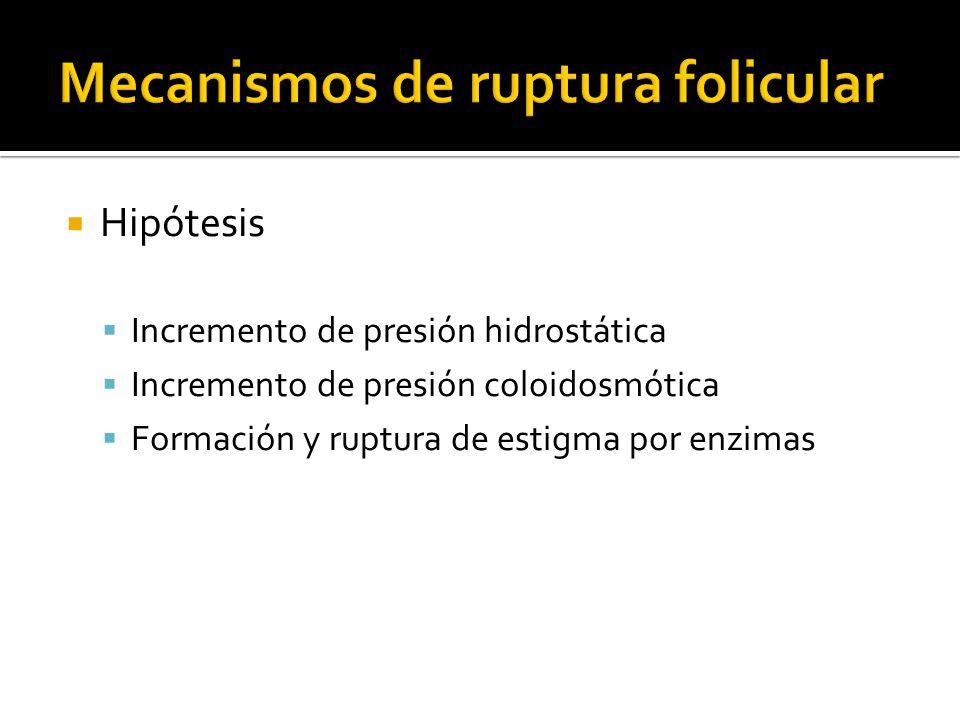 Hipótesis Incremento de presión hidrostática Incremento de presión coloidosmótica Formación y ruptura de estigma por enzimas