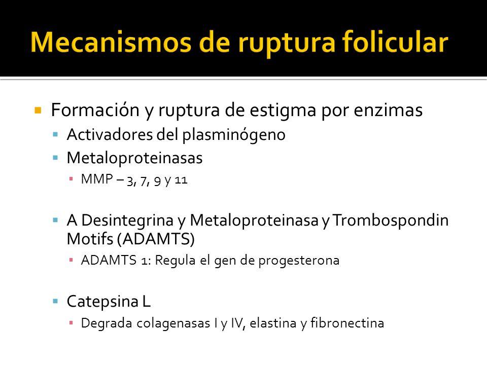 Activadores del plasminógeno Metaloproteinasas MMP – 3, 7, 9 y 11 A Desintegrina y Metaloproteinasa y Trombospondin Motifs (ADAMTS) ADAMTS 1: Regula e