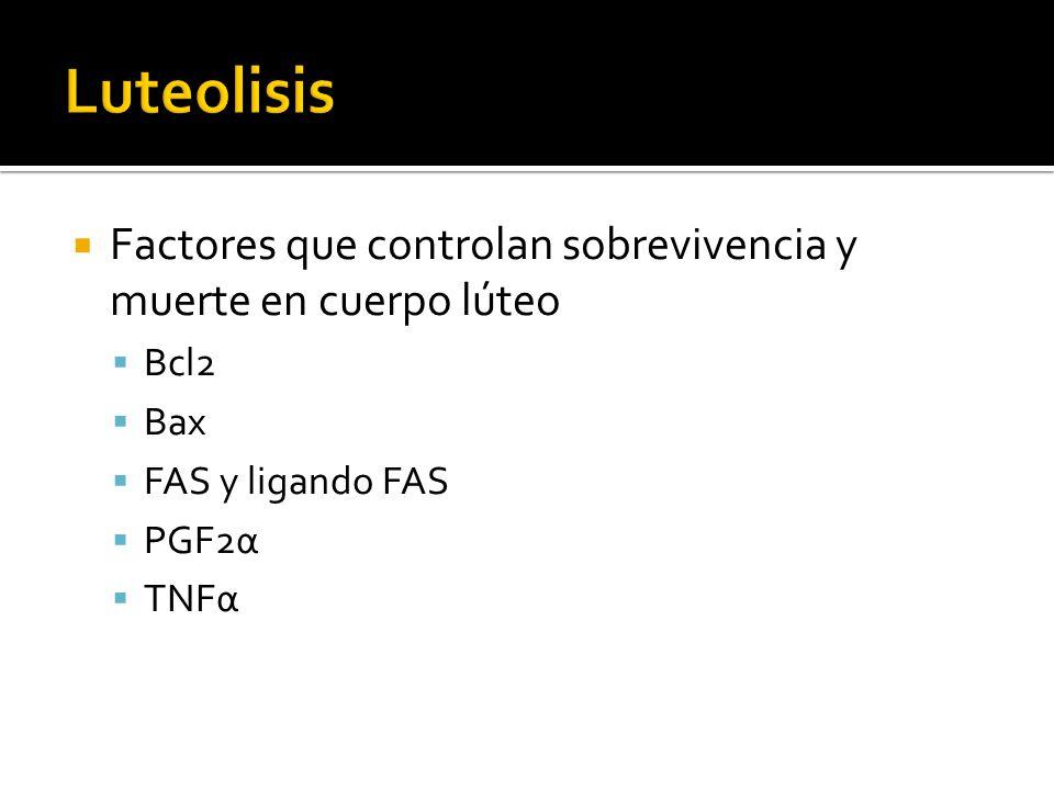 Factores que controlan sobrevivencia y muerte en cuerpo lúteo Bcl2 Bax FAS y ligando FAS PGF2α TNFα