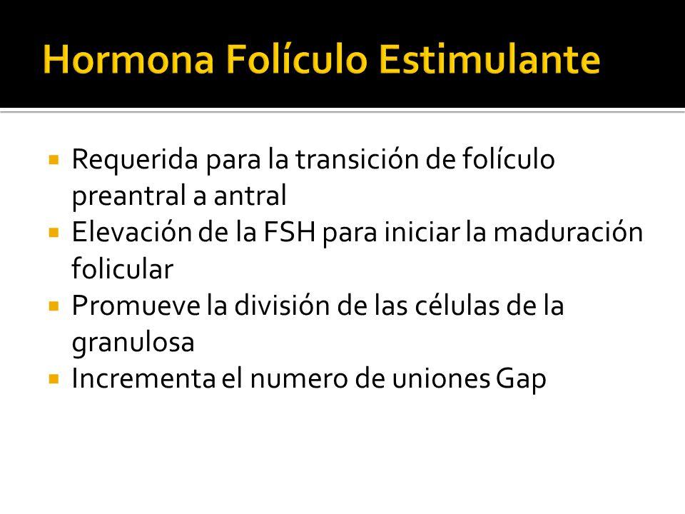 Requerida para la transición de folículo preantral a antral Elevación de la FSH para iniciar la maduración folicular Promueve la división de las célul