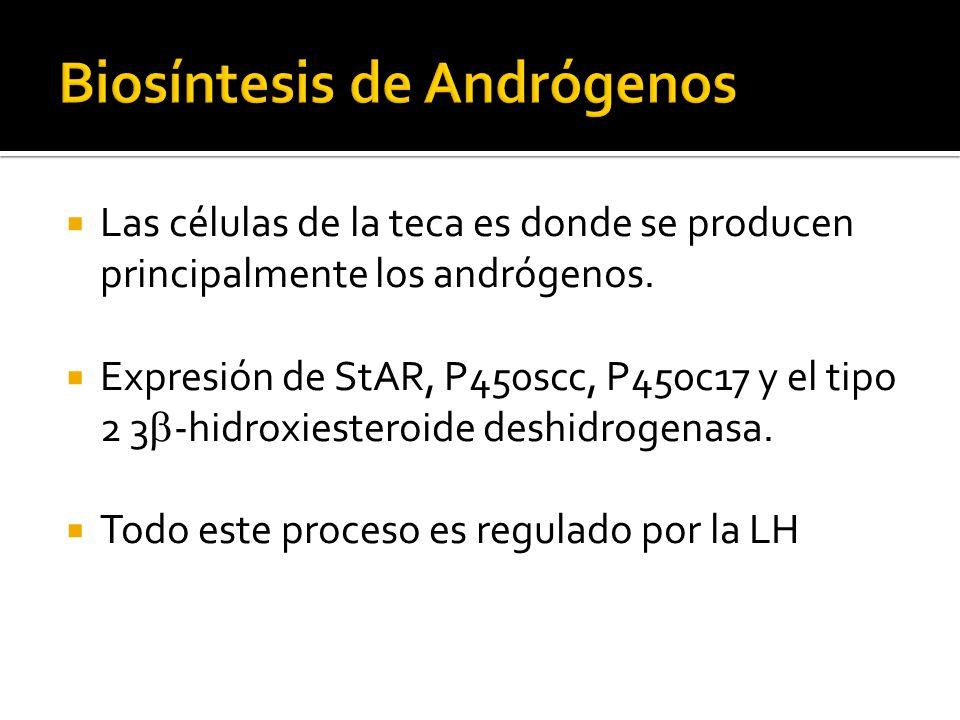 Las células de la teca es donde se producen principalmente los andrógenos. Expresión de StAR, P450scc, P450c17 y el tipo 2 3 -hidroxiesteroide deshidr