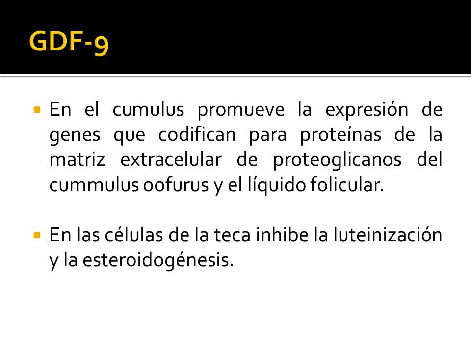 En el cumulus promueve la expresión de genes que codifican para proteínas de la matriz extracelular de proteoglicanos del cummulus oofurus y el líquid