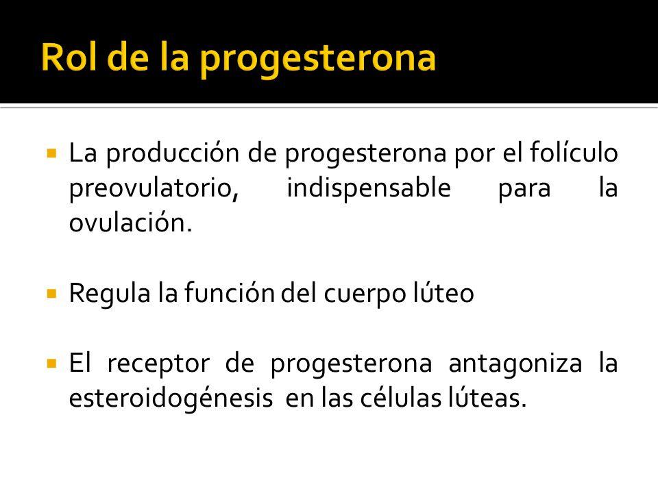 La producción de progesterona por el folículo preovulatorio, indispensable para la ovulación. Regula la función del cuerpo lúteo El receptor de proges