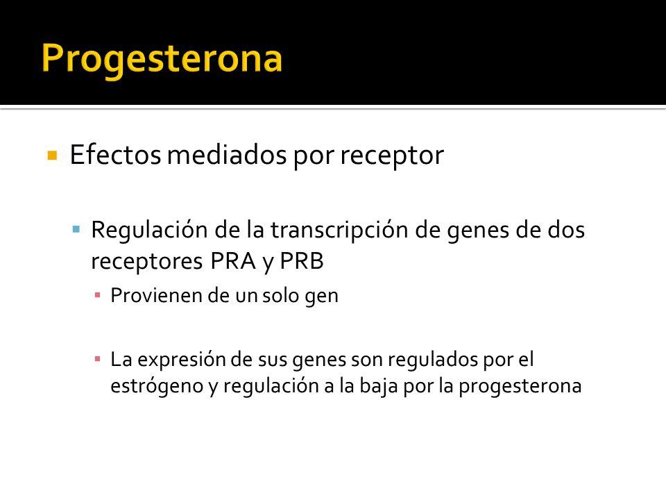 Efectos mediados por receptor Regulación de la transcripción de genes de dos receptores PRA y PRB Provienen de un solo gen La expresión de sus genes s