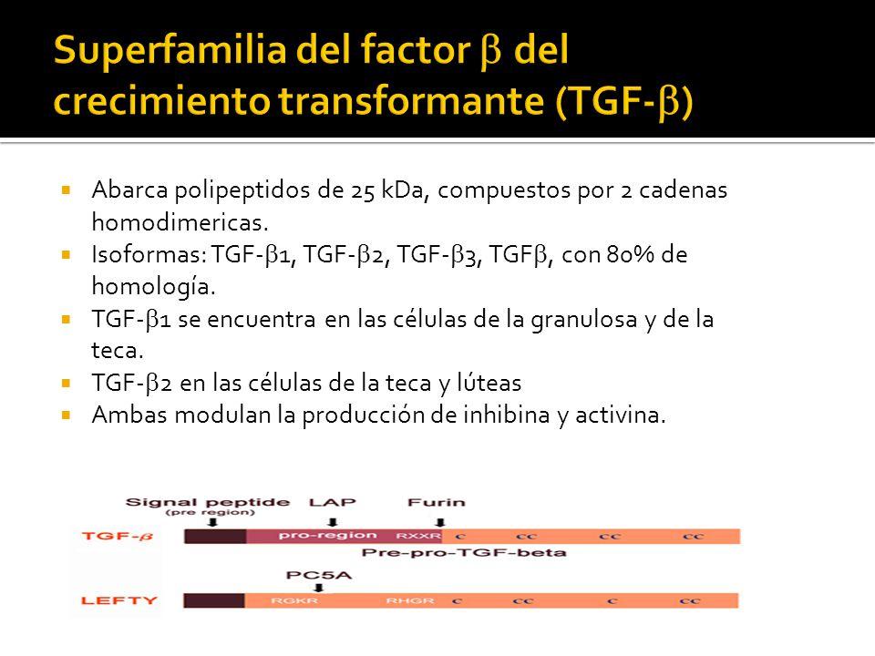 Abarca polipeptidos de 25 kDa, compuestos por 2 cadenas homodimericas. Isoformas: TGF- 1, TGF- 2, TGF- 3, TGF, con 80% de homología. TGF- 1 se encuent