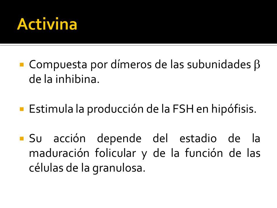 Compuesta por dímeros de las subunidades de la inhibina. Estimula la producción de la FSH en hipófisis. Su acción depende del estadio de la maduración