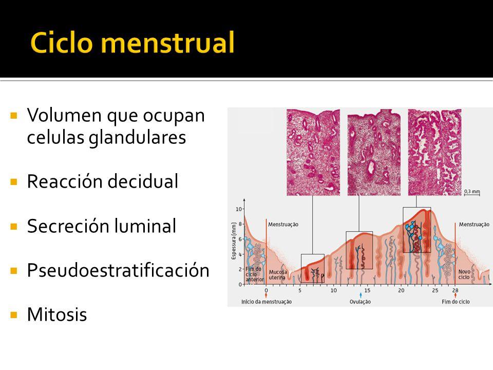 Volumen que ocupan celulas glandulares Reacción decidual Secreción luminal Pseudoestratificación Mitosis