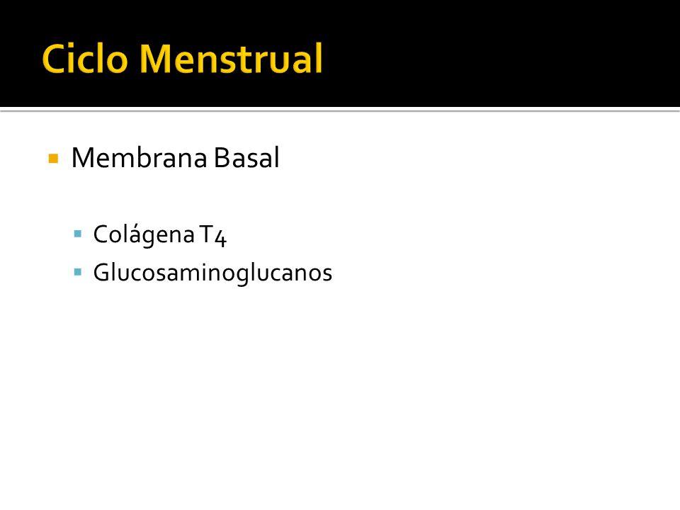 Membrana Basal Colágena T4 Glucosaminoglucanos