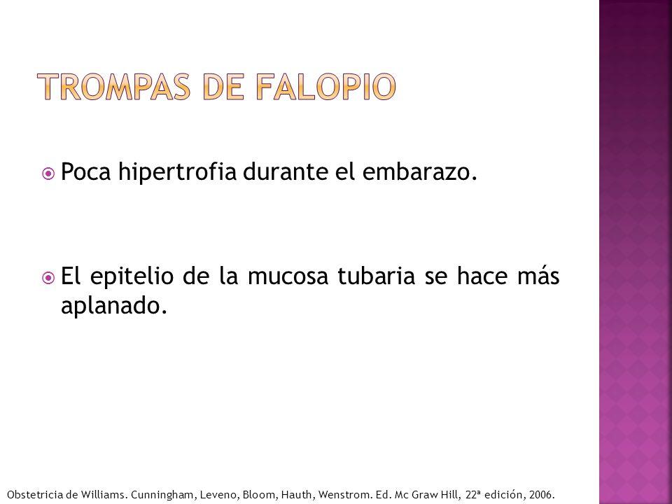 Poca hipertrofia durante el embarazo. El epitelio de la mucosa tubaria se hace más aplanado. Obstetricia de Williams. Cunningham, Leveno, Bloom, Hauth