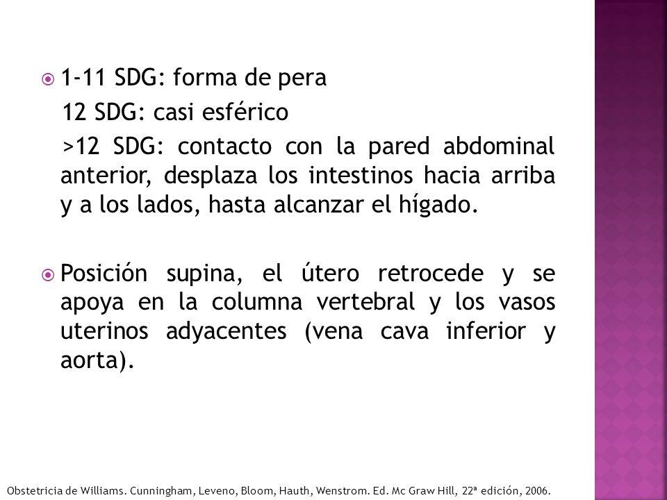 1-11 SDG: forma de pera 12 SDG: casi esférico >12 SDG: contacto con la pared abdominal anterior, desplaza los intestinos hacia arriba y a los lados, h