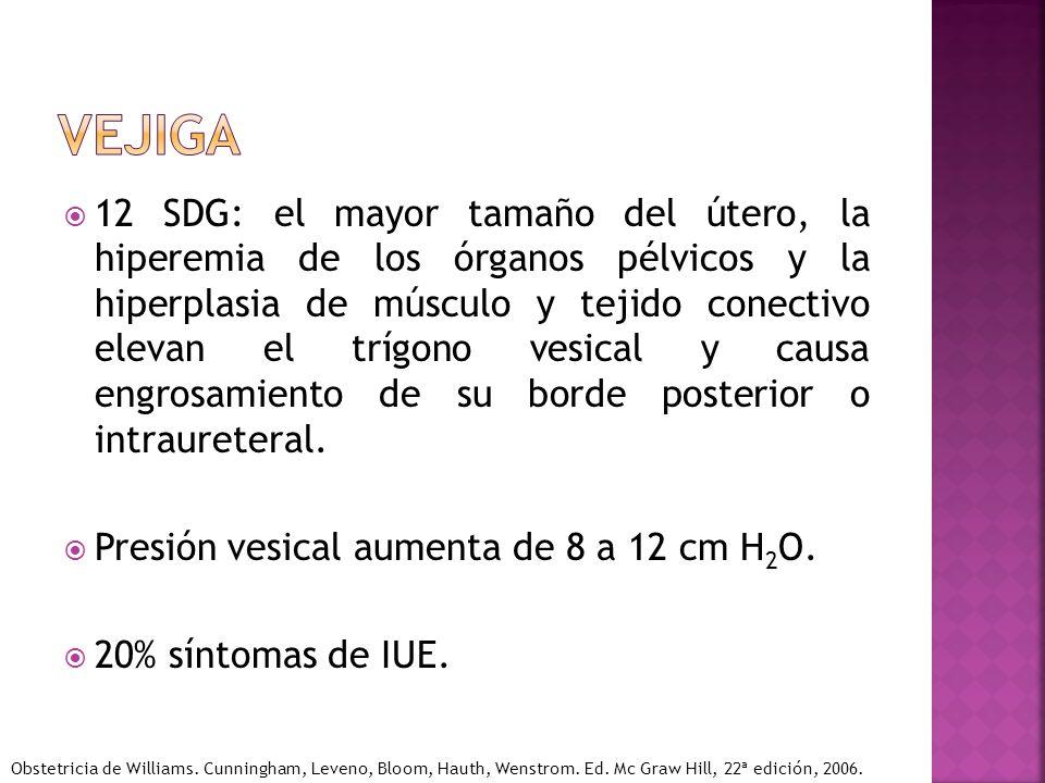 12 SDG: el mayor tamaño del útero, la hiperemia de los órganos pélvicos y la hiperplasia de músculo y tejido conectivo elevan el trígono vesical y cau
