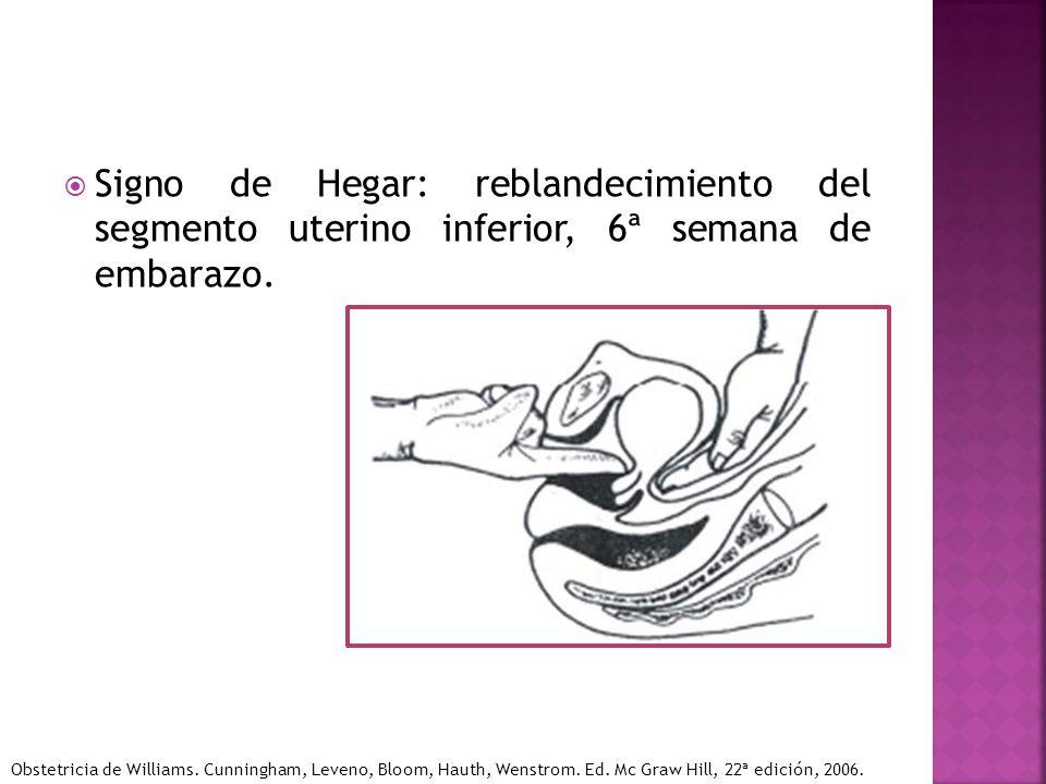 Signo de Hegar: reblandecimiento del segmento uterino inferior, 6ª semana de embarazo. Obstetricia de Williams. Cunningham, Leveno, Bloom, Hauth, Wens