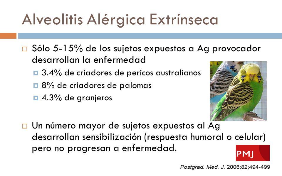 Alveolitis Alérgica Extrínseca Sólo 5-15% de los sujetos expuestos a Ag provocador desarrollan la enfermedad 3.4% de criadores de pericos australianos