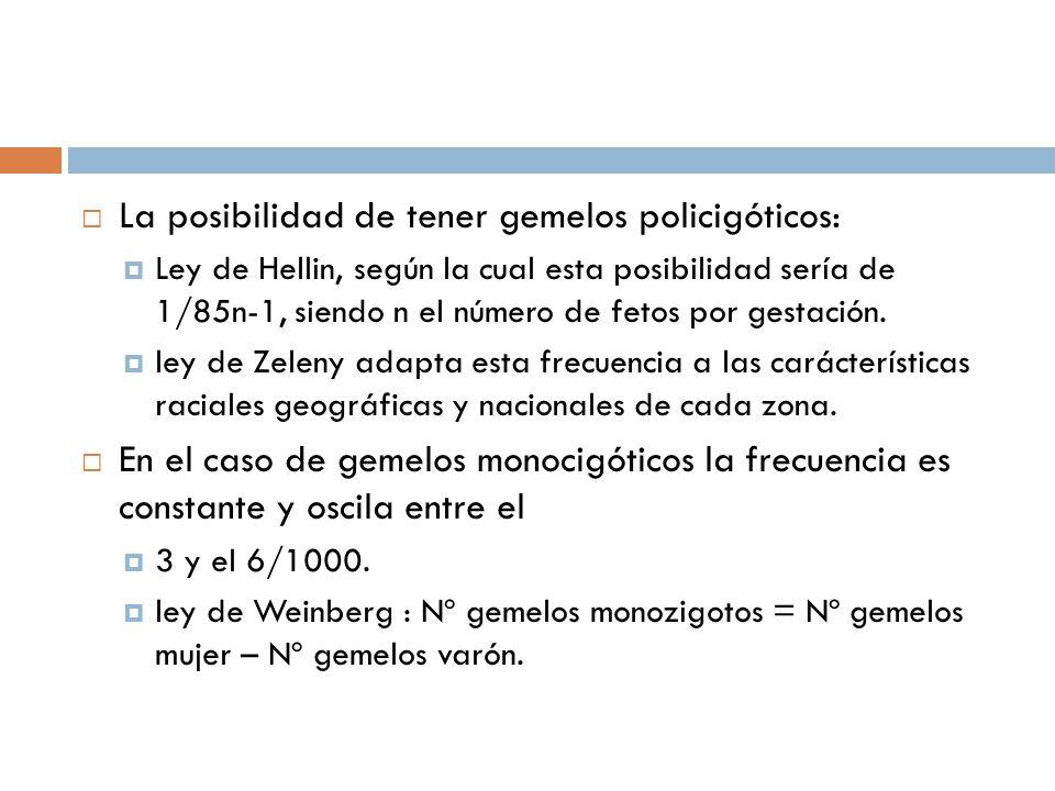 La posibilidad de tener gemelos policigóticos: Ley de Hellin, según la cual esta posibilidad sería de 1/85n-1, siendo n el número de fetos por gestaci