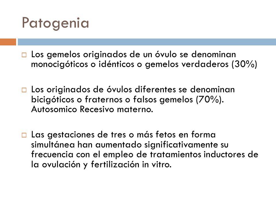 Patogenia Los gemelos originados de un óvulo se denominan monocigóticos o idénticos o gemelos verdaderos (30%) Los originados de óvulos diferentes se