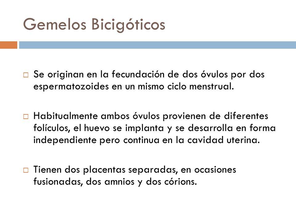 Gemelos Bicigóticos Se originan en la fecundación de dos óvulos por dos espermatozoides en un mismo ciclo menstrual. Habitualmente ambos óvulos provie