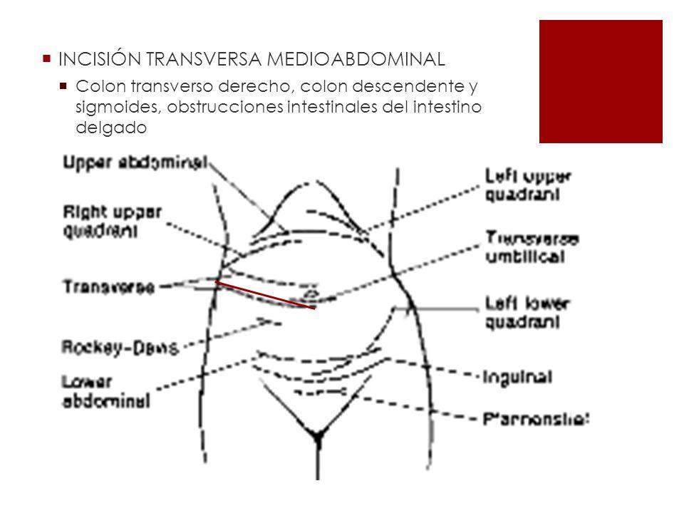 INCISIÓN TRANSVERSA MEDIOABDOMINAL Colon transverso derecho, colon descendente y sigmoides, obstrucciones intestinales del intestino delgado