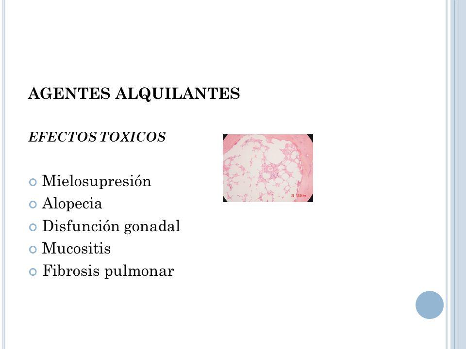AGENTES ALQUILANTES EFECTOS TOXICOS Mielosupresión Alopecia Disfunción gonadal Mucositis Fibrosis pulmonar