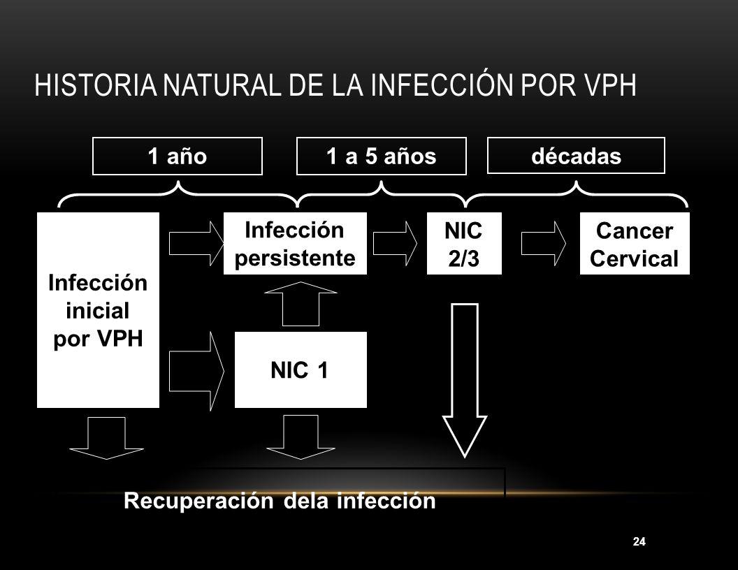 24 1 año1 a 5 añosdécadas Infección inicial por VPH Infección persistente NIC 2/3 Cancer Cervical NIC 1 Recuperación dela infección HISTORIA NATURAL D