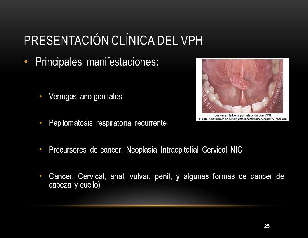 25 PRESENTACIÓN CLÍNICA DEL VPH Principales manifestaciones: Verrugas ano-genitales Papilomatosis respiratoria recurrente Precursores de cancer: Neopl