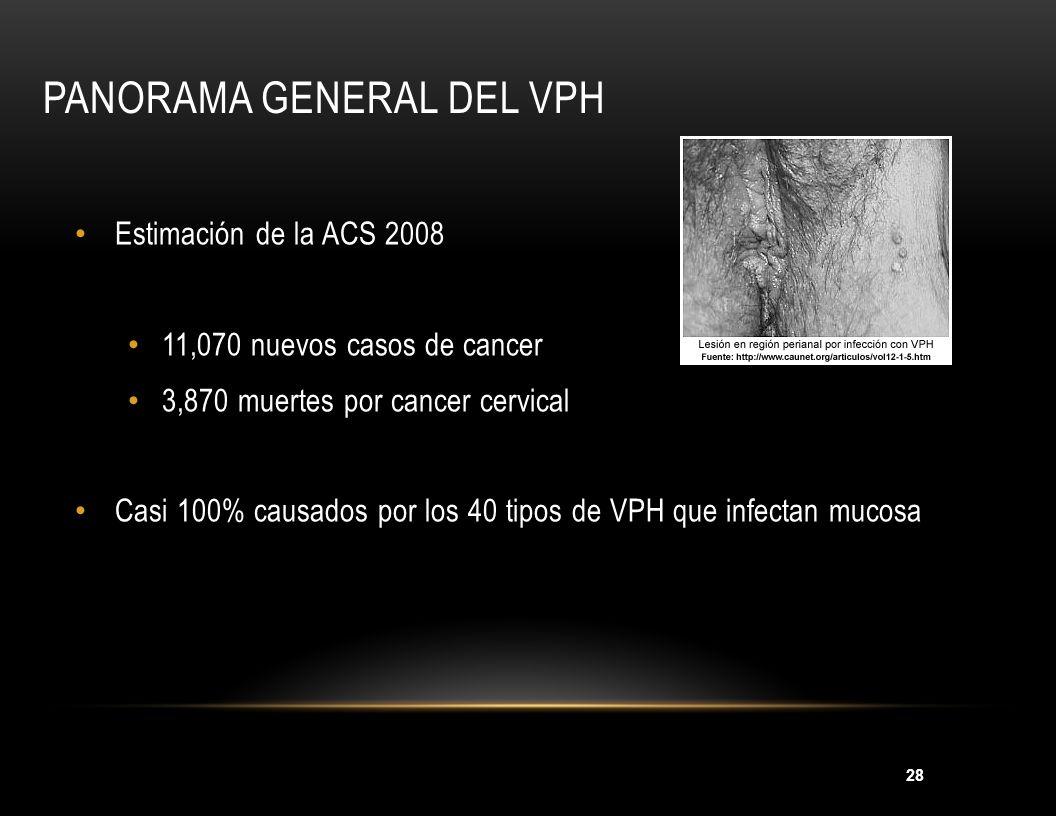 28 PANORAMA GENERAL DEL VPH Estimación de la ACS 2008 11,070 nuevos casos de cancer 3,870 muertes por cancer cervical Casi 100% causados por los 40 ti