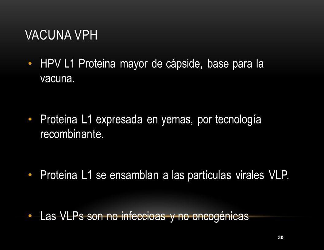 30 VACUNA VPH HPV L1 Proteina mayor de cápside, base para la vacuna. Proteina L1 expresada en yemas, por tecnología recombinante. Proteina L1 se ensam