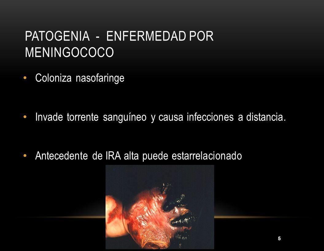 5 PATOGENIA - ENFERMEDAD POR MENINGOCOCO Coloniza nasofaringe Invade torrente sanguíneo y causa infecciones a distancia. Antecedente de IRA alta puede