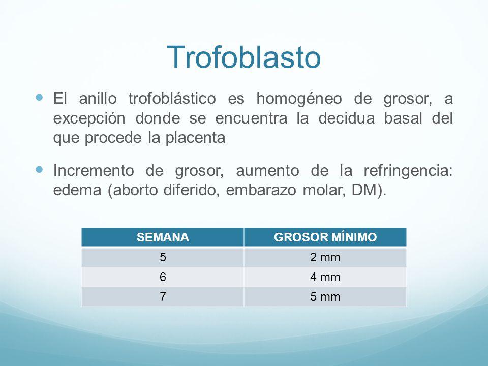 Trofoblasto El anillo trofoblástico es homogéneo de grosor, a excepción donde se encuentra la decidua basal del que procede la placenta Incremento de grosor, aumento de la refringencia: edema (aborto diferido, embarazo molar, DM).