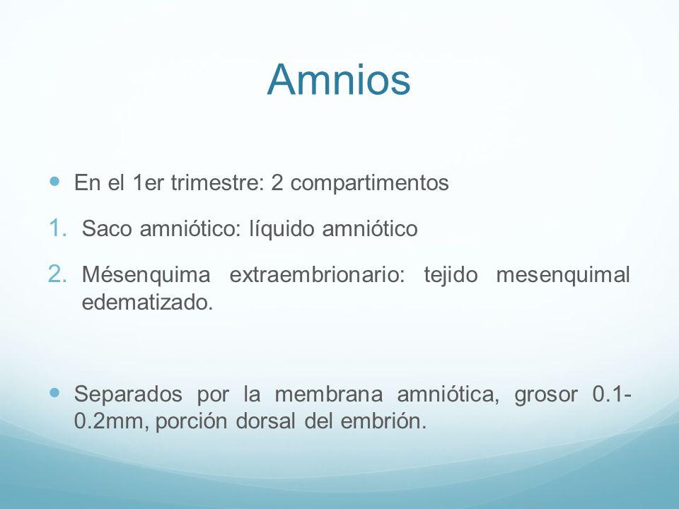 Amnios En el 1er trimestre: 2 compartimentos 1.Saco amniótico: líquido amniótico 2.