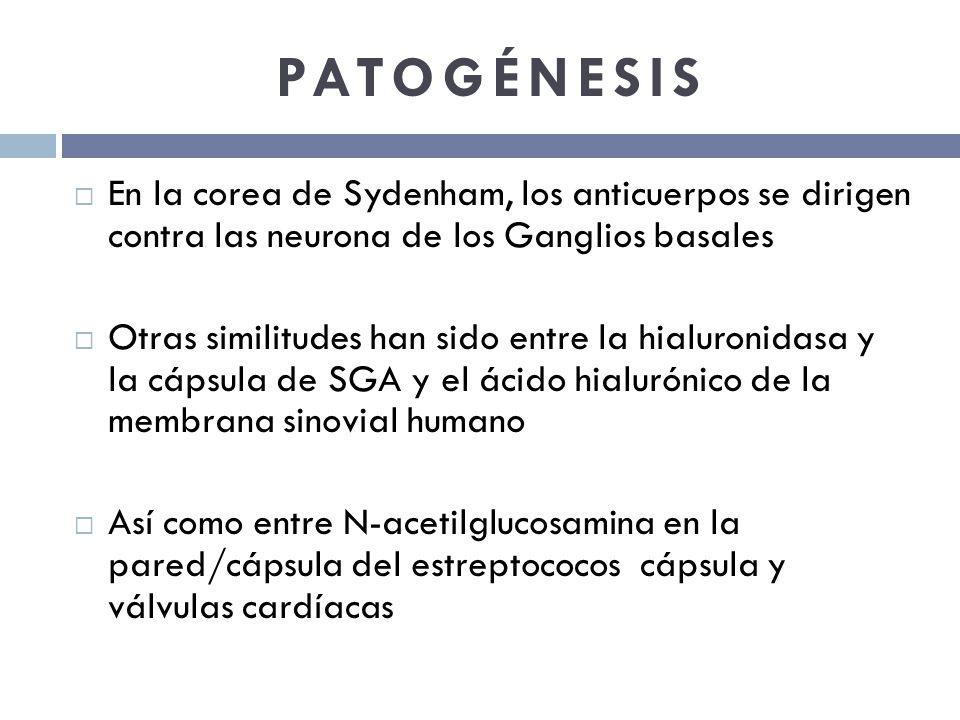 PATOGÉNESIS En la corea de Sydenham, los anticuerpos se dirigen contra las neurona de los Ganglios basales Otras similitudes han sido entre la hialuro