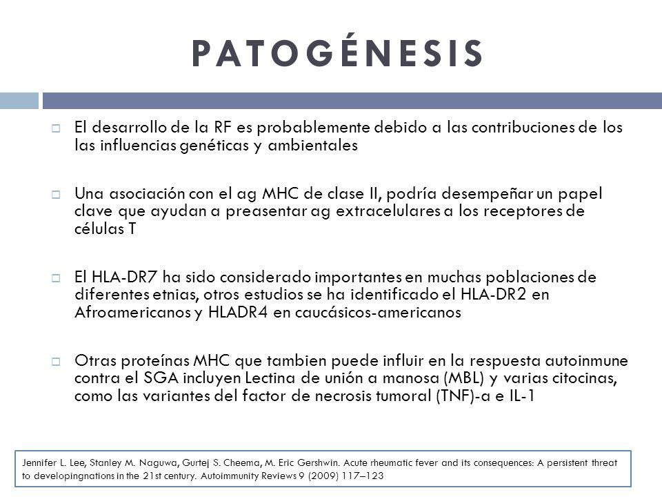 PATOGÉNESIS El desarrollo de la RF es probablemente debido a las contribuciones de los las influencias genéticas y ambientales Una asociación con el a