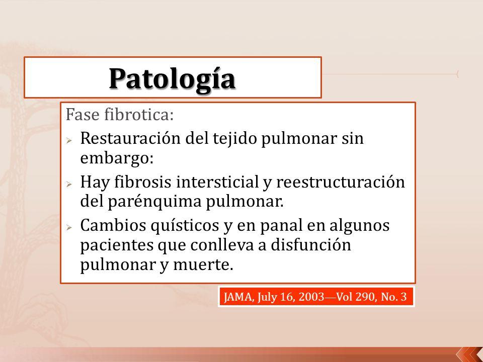 Fase fibrotica: Restauración del tejido pulmonar sin embargo: Hay fibrosis intersticial y reestructuración del parénquima pulmonar. Cambios quísticos