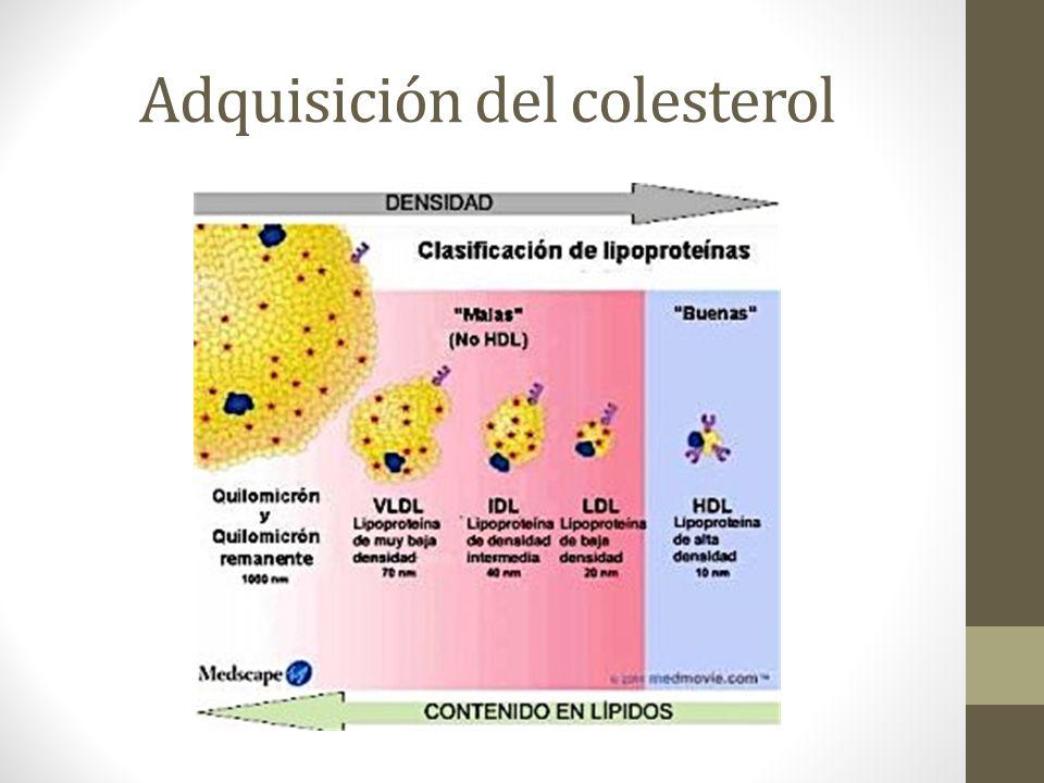 Adquisición del colesterol