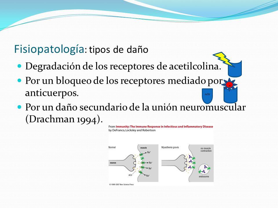 Fisiopatología : tipos de daño Degradación de los receptores de acetilcolina. Por un bloqueo de los receptores mediado por anticuerpos. Por un daño se