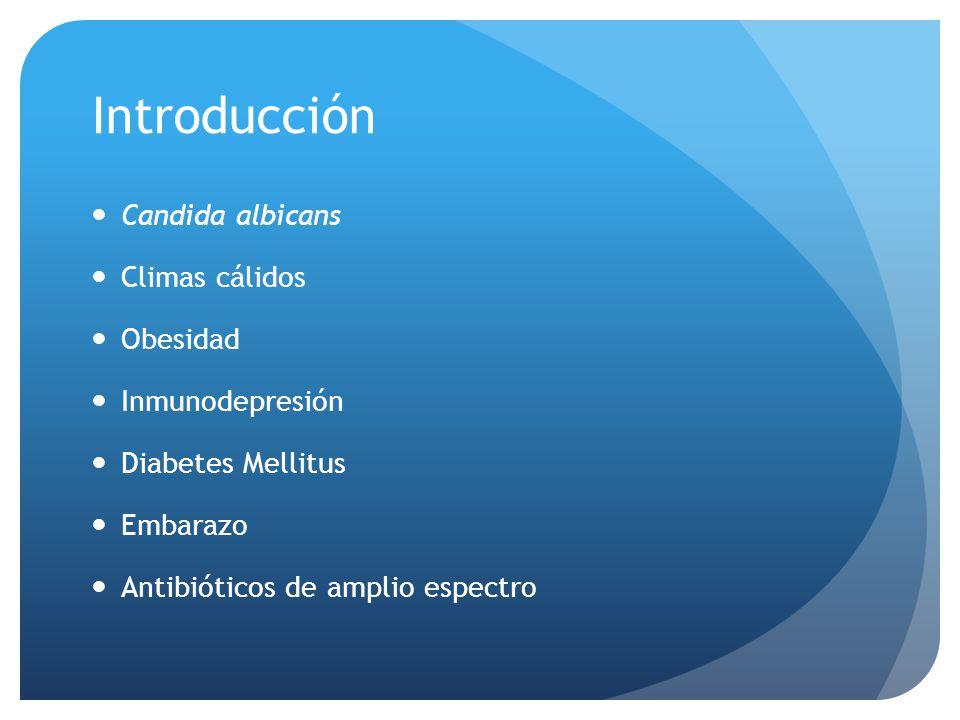 Introducción Candida albicans Climas cálidos Obesidad Inmunodepresión Diabetes Mellitus Embarazo Antibióticos de amplio espectro