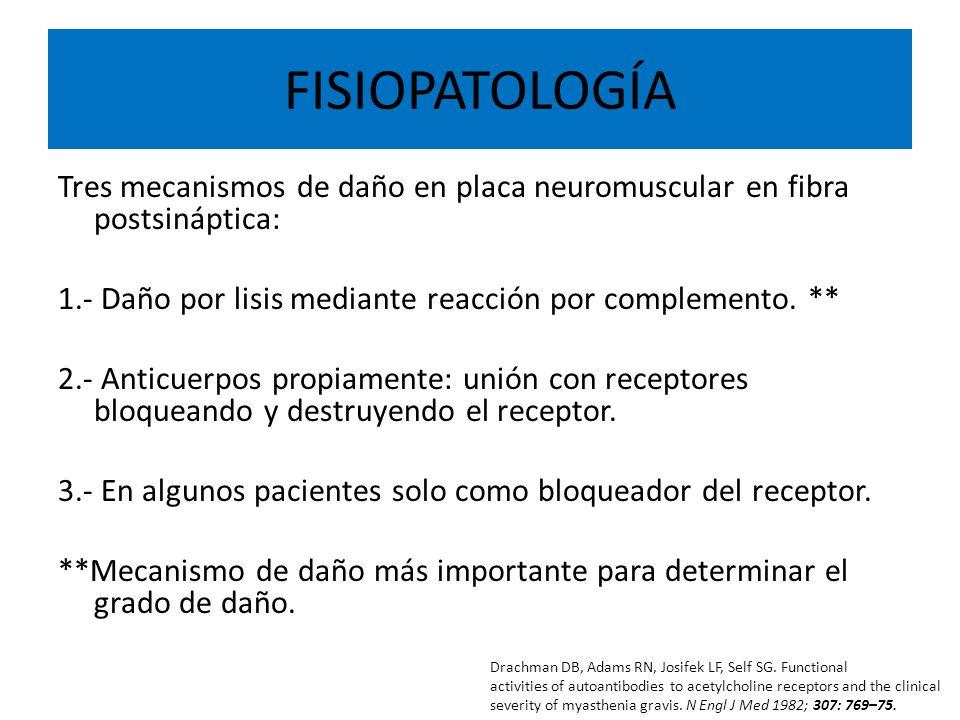 FISIOPATOLOGÍA Tres mecanismos de daño en placa neuromuscular en fibra postsináptica: 1.- Daño por lisis mediante reacción por complemento. ** 2.- Ant